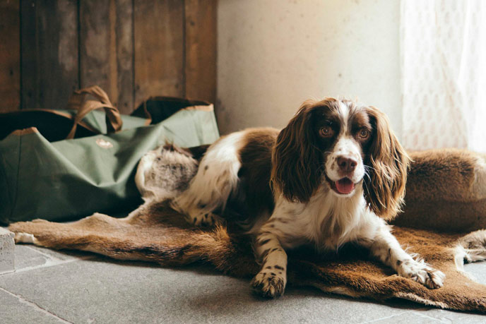 Making your holiday let dog friendly