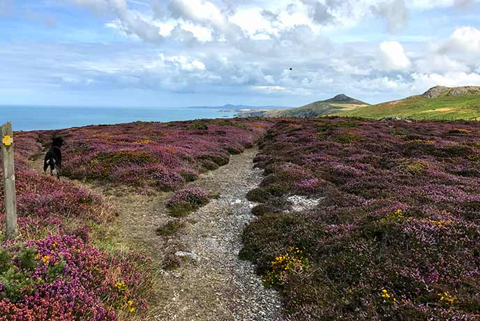 Walking the Coast National Park in Pembrokeshire