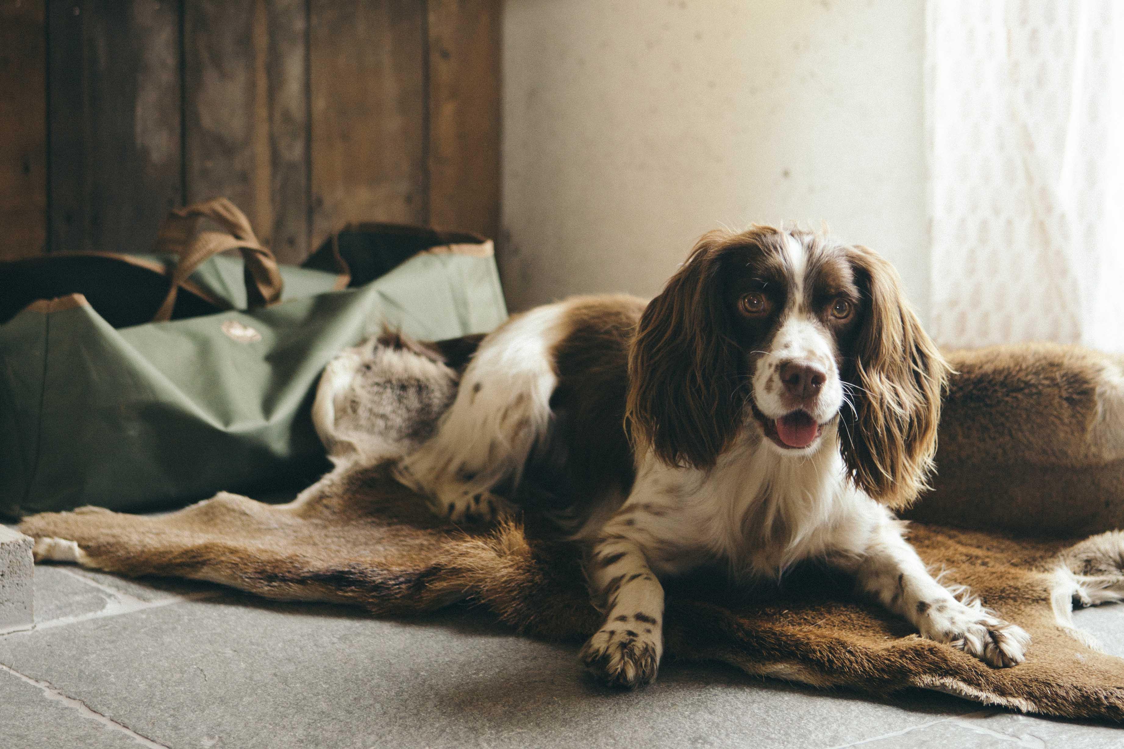 Dog_Friendly_Cottages