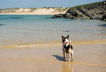 Pet friendly beaches in Cornwall