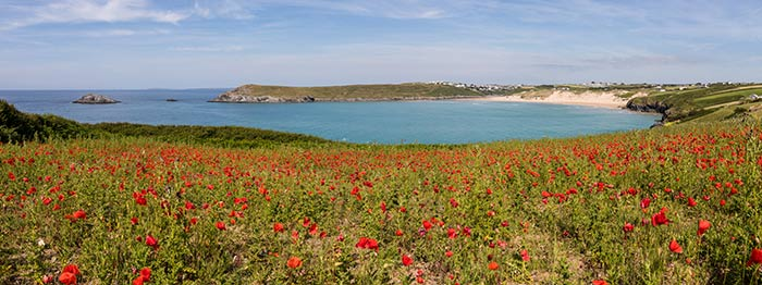 beach views over a poppy field