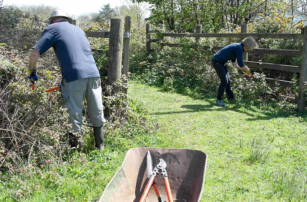 Clearing brambles for Cornwall Wildlife Trust at Five Acres, Truro