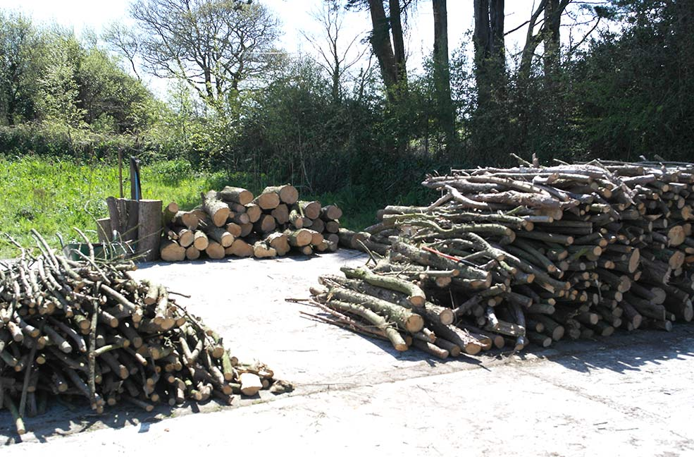 Logs cleared from the soon-to-be wildflower meadow | Five Acres, Truro