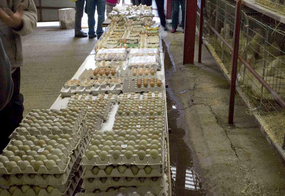 Egg selection