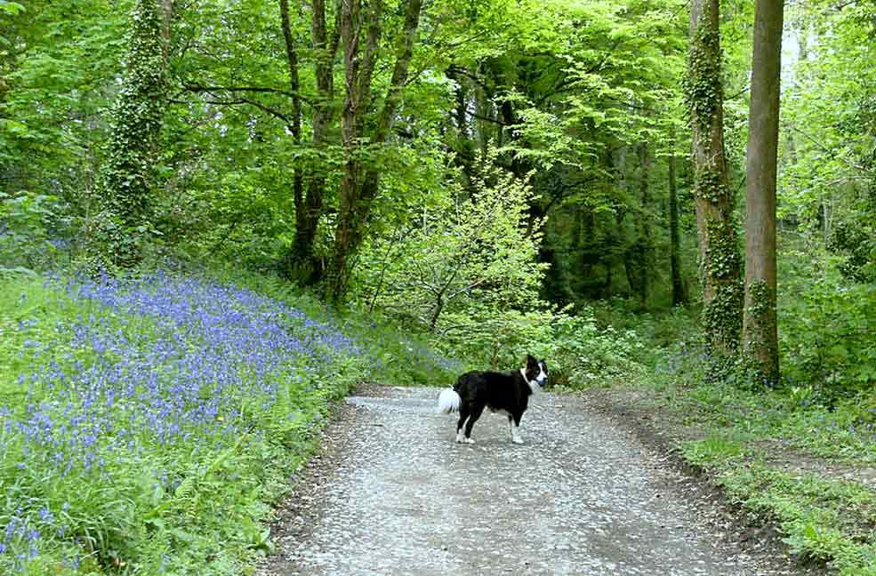 Ginny in Penrose Woods