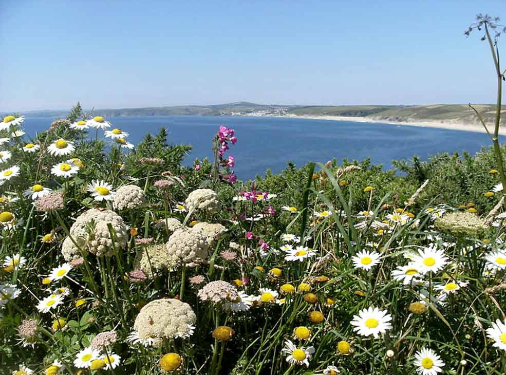 Summer flowers - looking towards Loe Bar and Porthleven