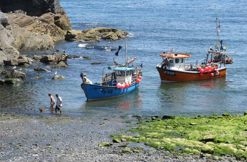 Guest experience: Wonder and wildlife of the Lizard peninsula from a cottage in Cadgwith
