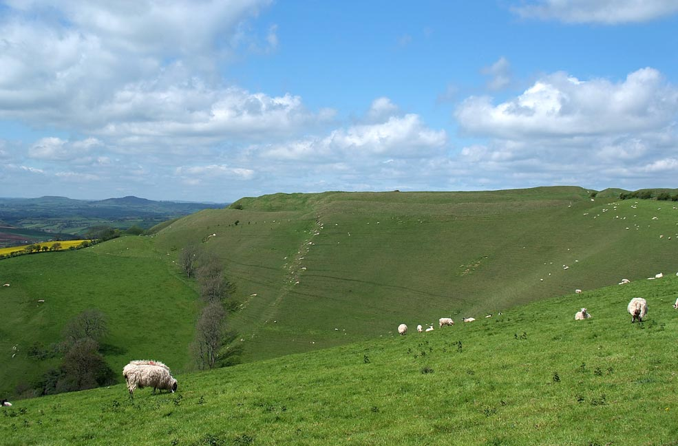 A Traveller's Tale: Eggardon Hill Fort