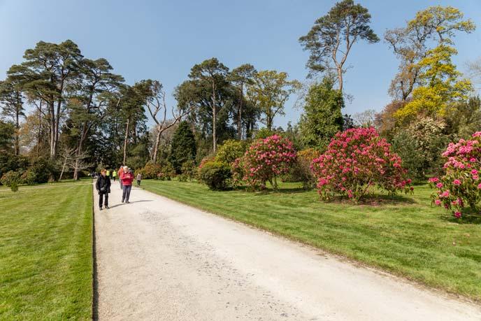 Tregothnan Gardens, Cornwall