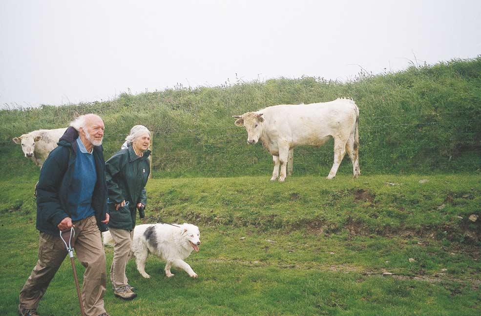Walking the animals