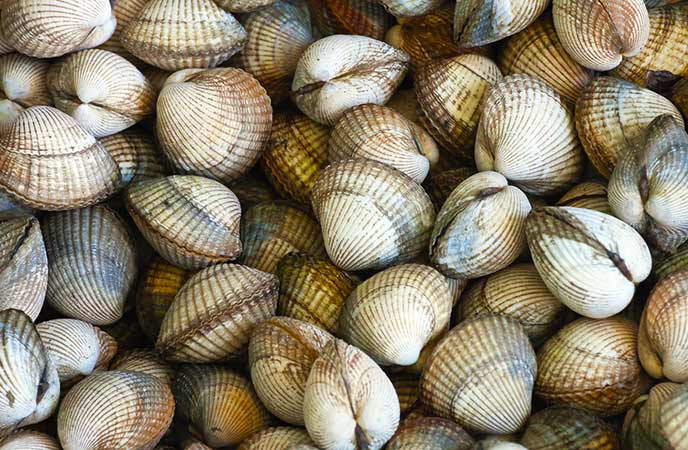 Cockles in Cornwall