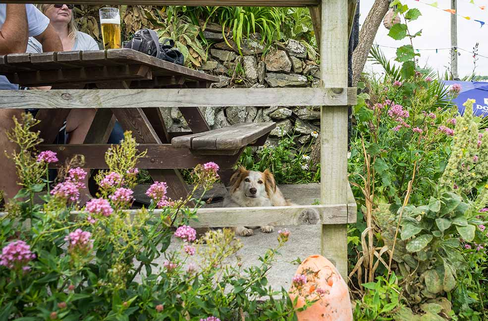 Top 6 dog friendly cafes on the Isle of Wight