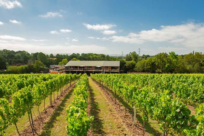 A very idyllic English wine experience - Bolney Wine Estate