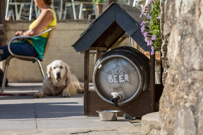 Dog friendly restaurants, pubs and cafes in Cornwall