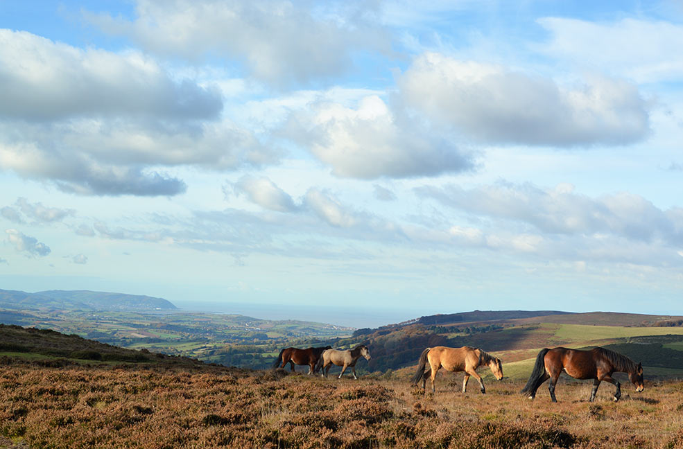 The rolling hills of the Quantocks in Somerset. This part of the county makes for some beautiful autumn and winter walks.