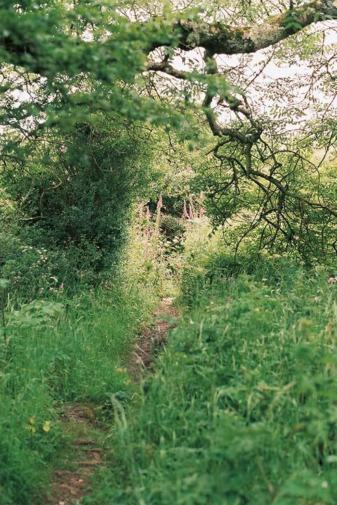 WestCountry green landscape