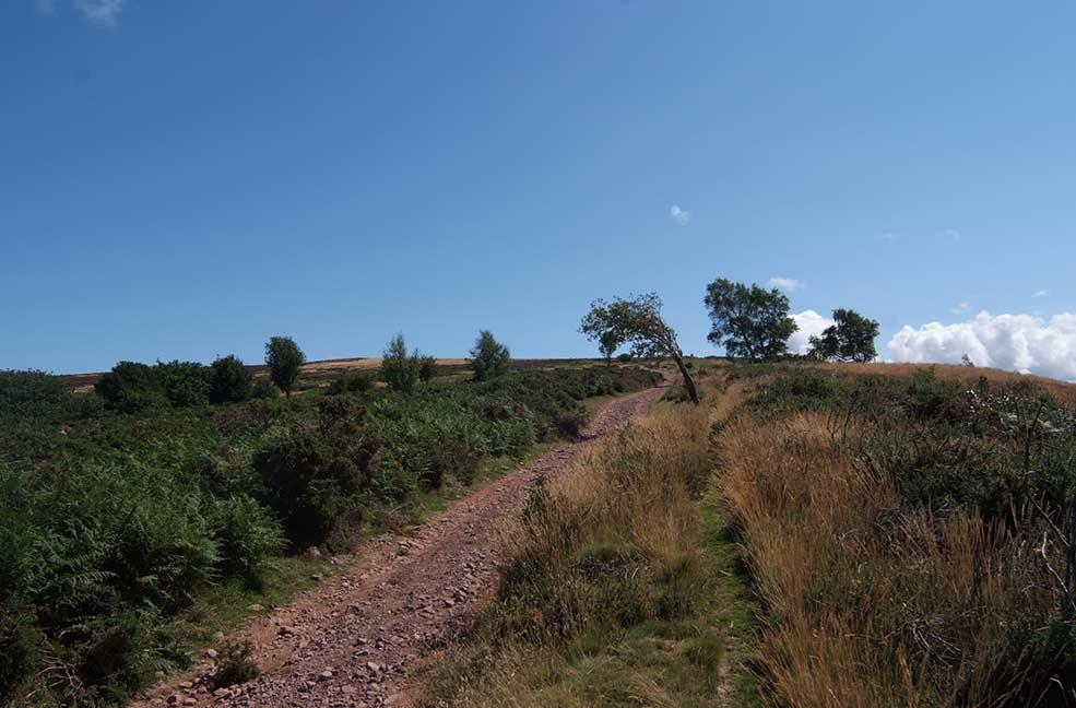 Quantock hill walk