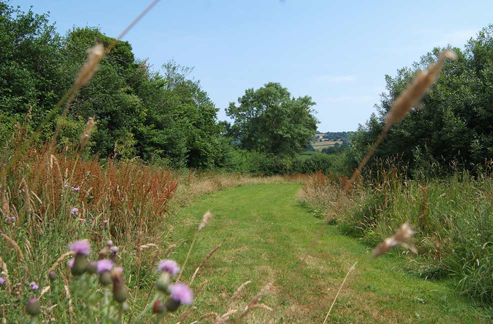 The Cow Shed meadow