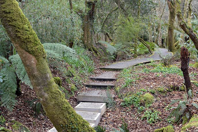Step into the jungle at Tremenheere Sculpture Gardens near Penzance.