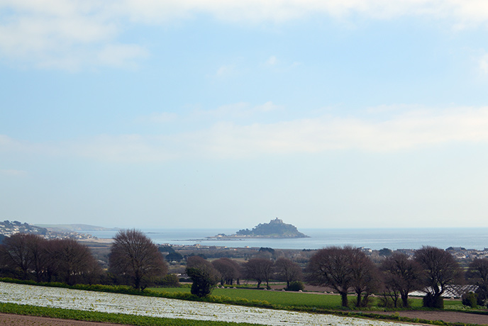 Amazing views of St Michaels Mount from Tremenheere gardens.