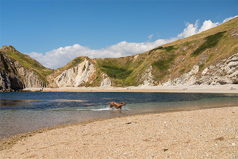 11 unrestricted dog friendly Dorset beaches