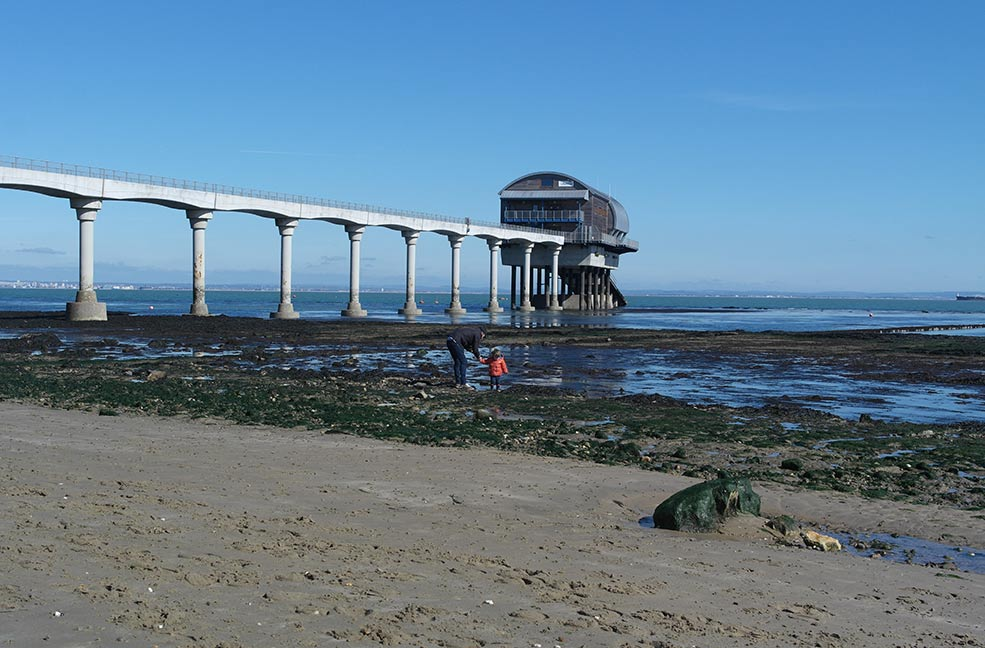 Best Dog Friendly Beaches Isle Of Wight