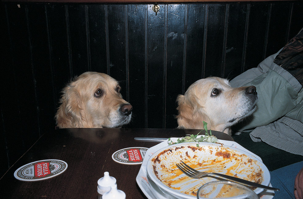 Dogs in a pub