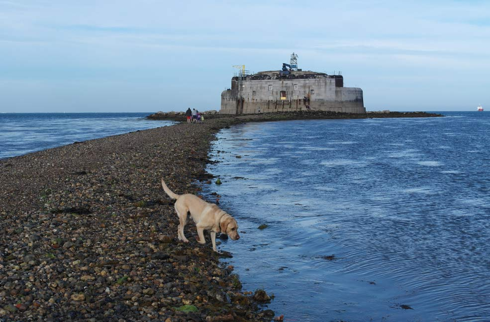 Top 6 dog friendly pubs on the Isle of Wight