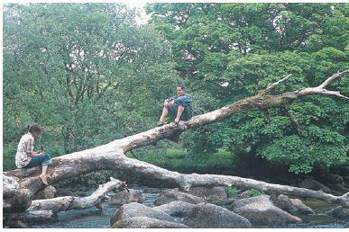 Hexworthy log