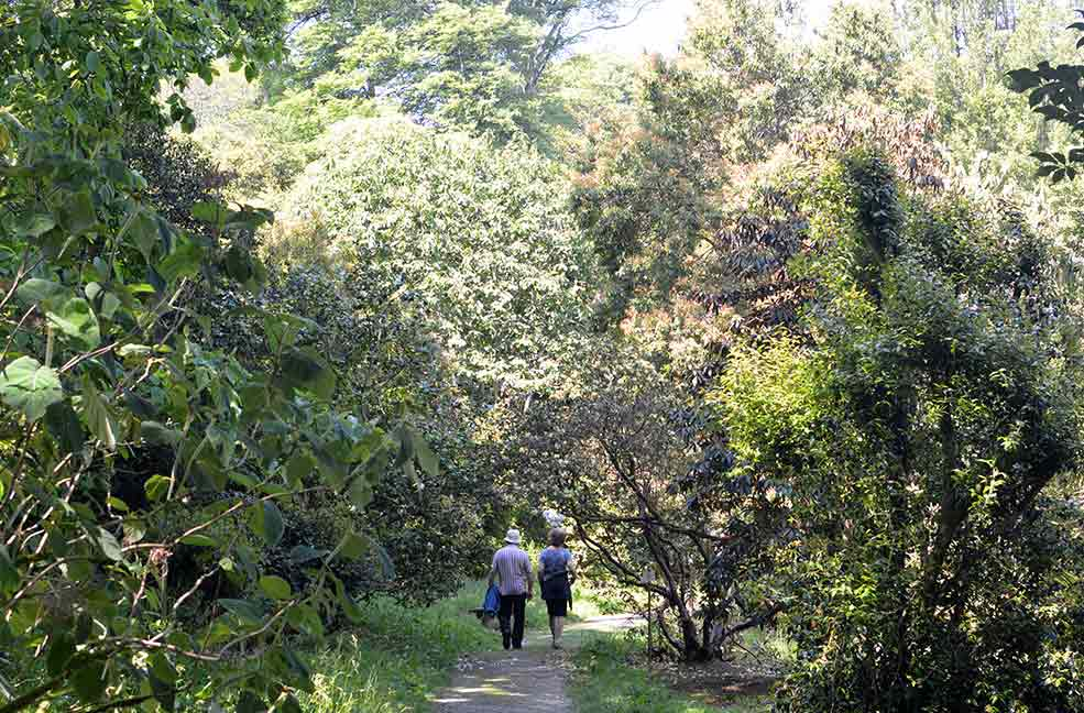A couple walk through the sun-dappled pathways to explore the extensive gardens and estate at Caerhays.