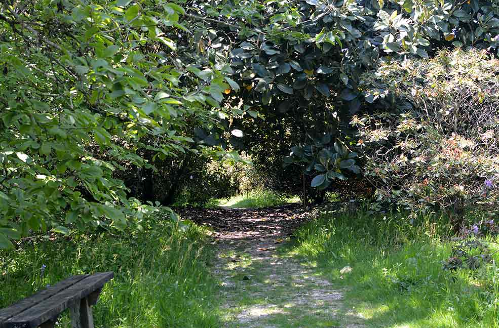 A pathway at the top of the garden leading to a quiet spot in the sunshine.