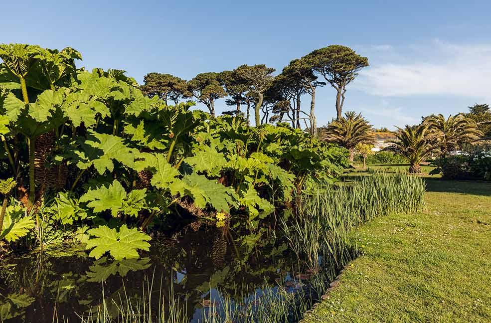 Falmouth is surrounded by some fantastic sub tropical gardens.