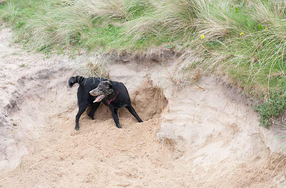 Best 5 dog friendly beaches in Somerset