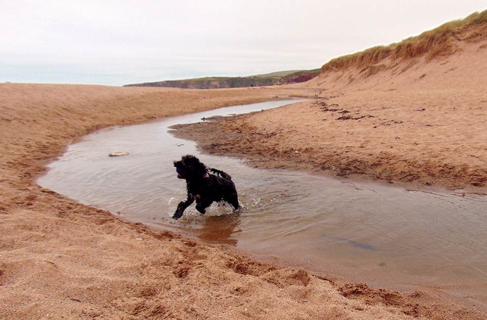 South Devon has plenty of dog friendly beaches and walks to keep your dog busy while allowing you to see some of the Devon coast.