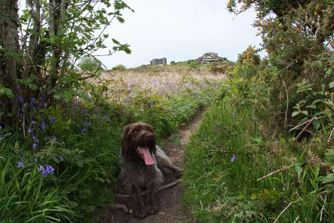 Woodland dog walks in Dorset