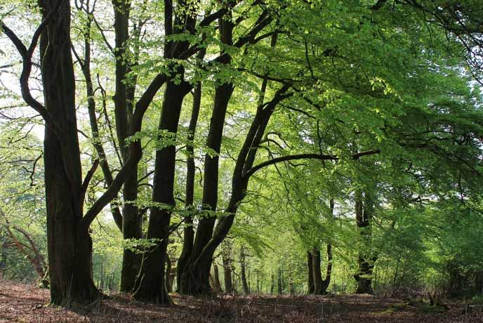 Thorncombe Wood, Dorset