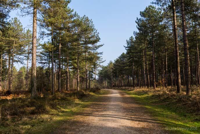 Wareham Woods, Dorset