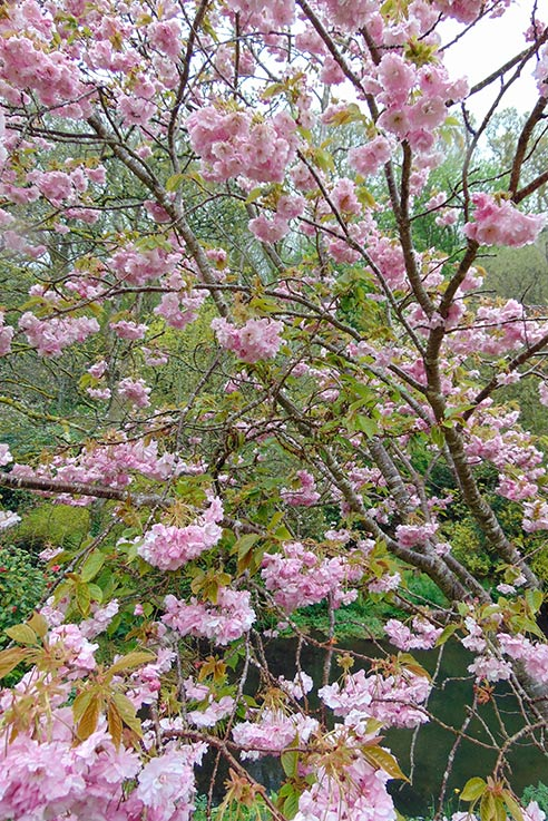 Spring time brings out the most lovely blooms in Devon's gardens.