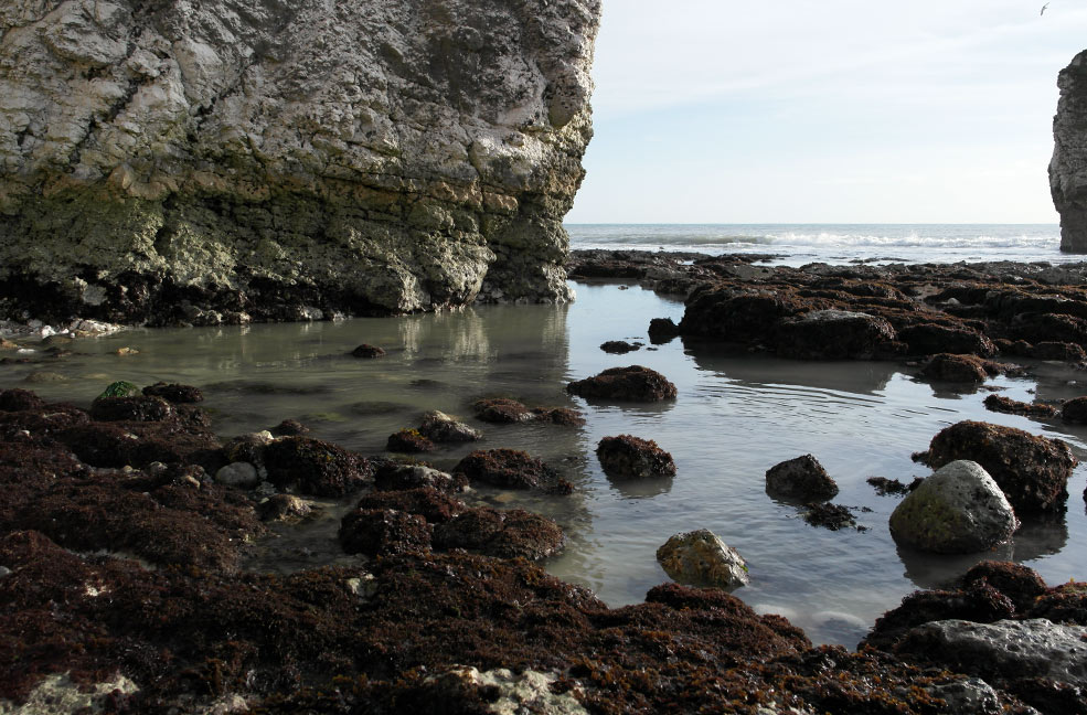 The rockpools at Freshwater bay play host to a diversity of wildlife.