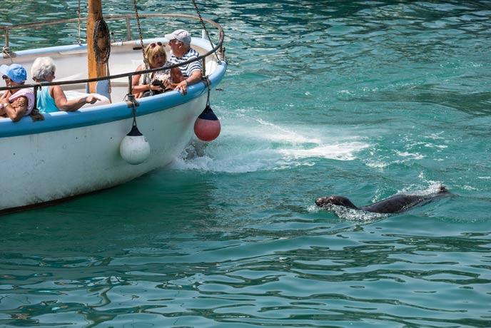 Seal saying hello, south Cornwall