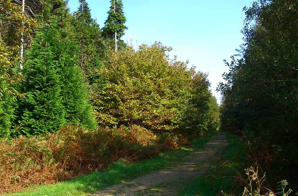 Walk the many paths through Parkhurst forest, if you're lucky you might spot a red squirrel.