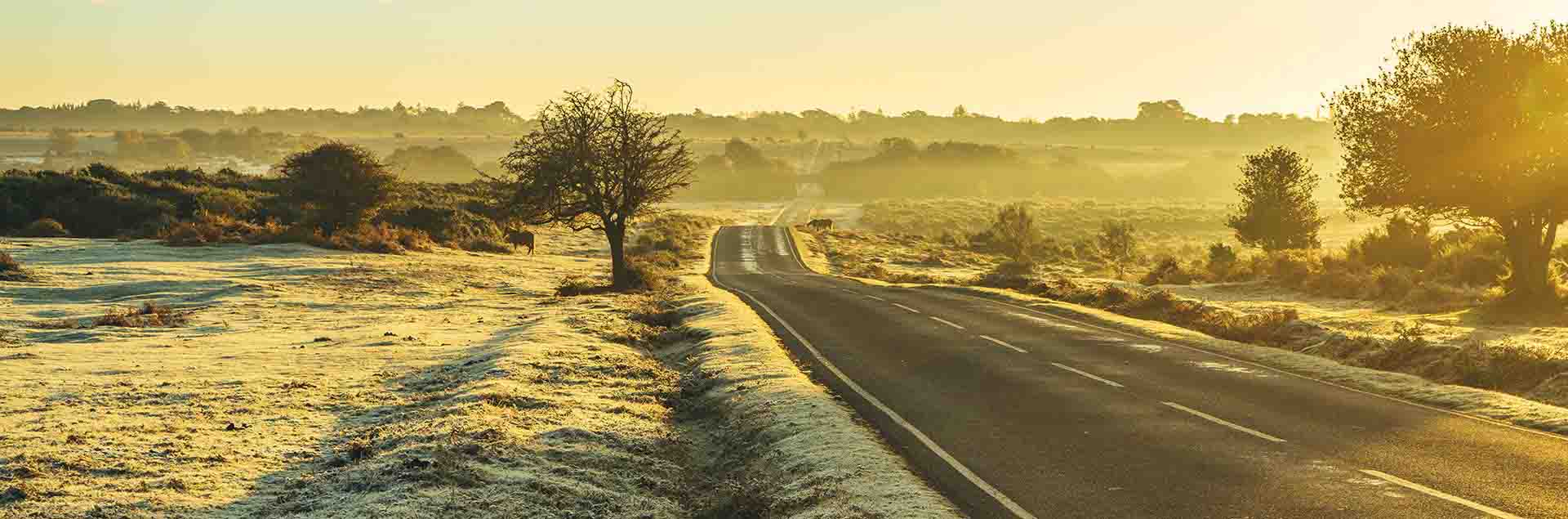 New Forest travel route