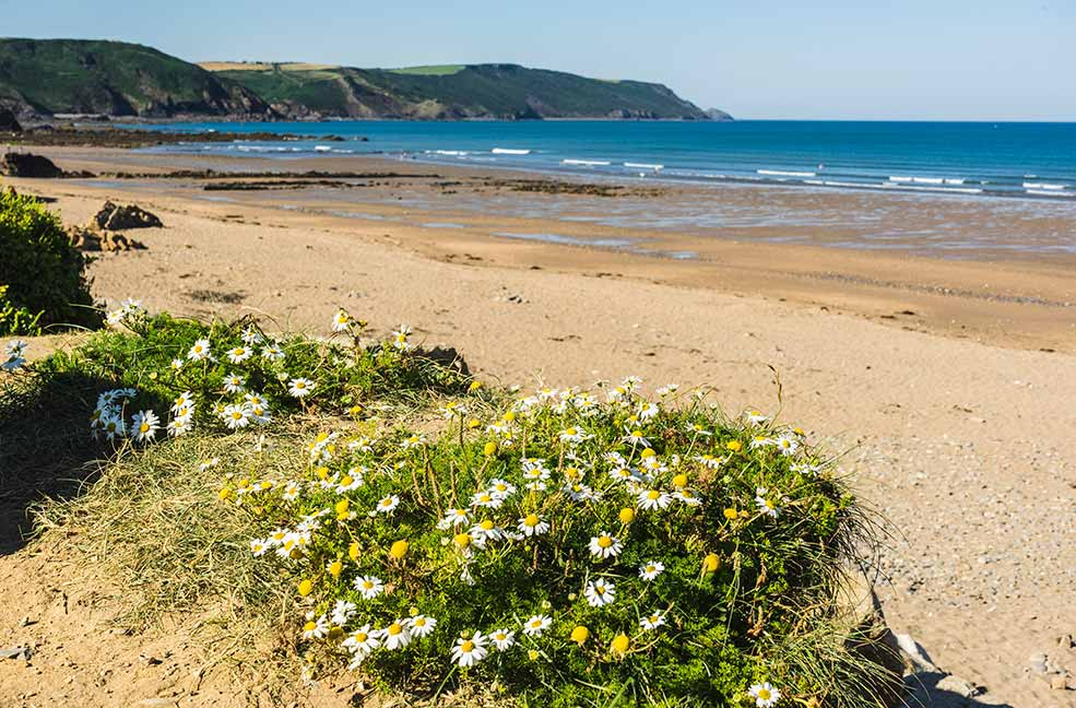 Bude beach is quieter in June than the rest of the summer. Introduce your little ones to the beach without having to deal with the crowds.