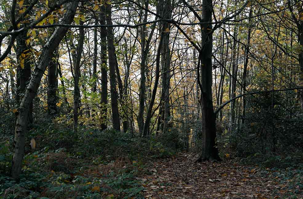 Borthwood Copse is a great place for a walk.