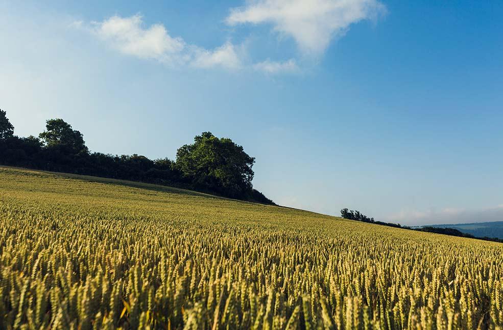 Somerset looks beautiful in the September sunshine.