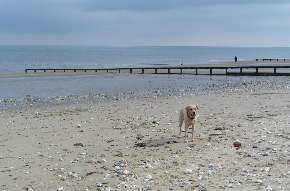 Shanklin beach on a sunny day