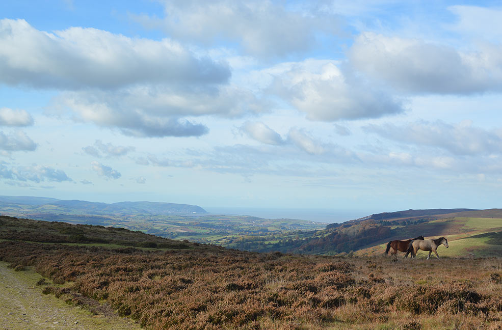 Ponies and a view on the Quantock hills in Somerset