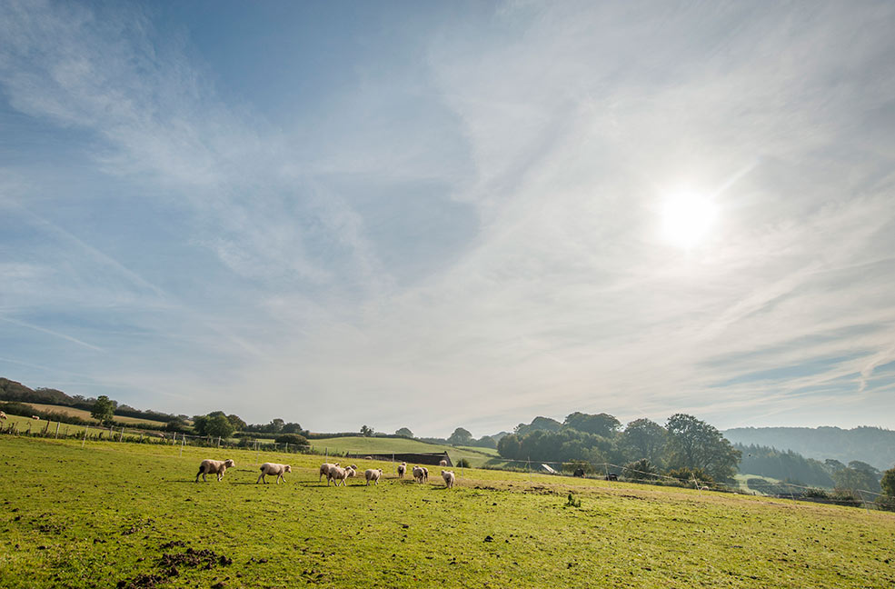 The whole of Somerset is filled with beautiful formal gardens but don't forget the unlimited beauty of the countryside.