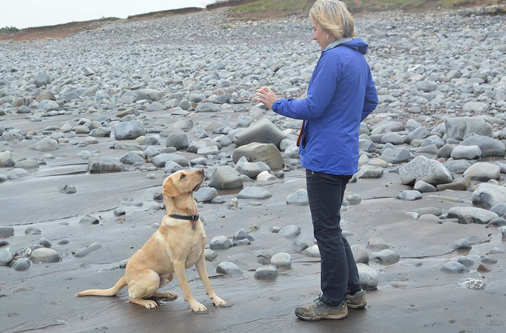 Playing fetch on the beach at Kilve in Somerset