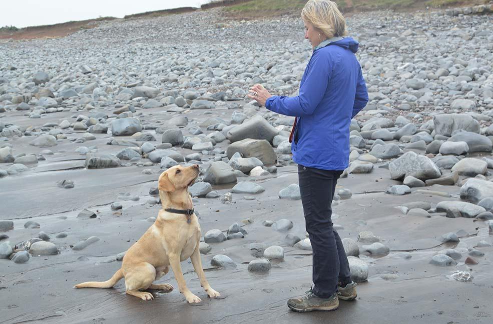 Kilve Beach Dog Friendly